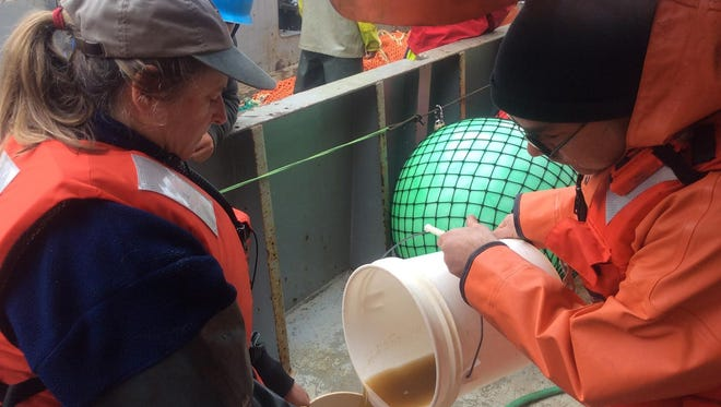 NOAA researchers pour a sample of sea water containing a brownish toxic algae into a jar aboard a research vessel off the Washington Coast.
