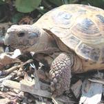 Police investigate tortoise kidnapping at Oshkosh's Menominee Park Zoo