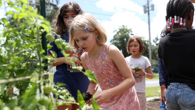 Sade Guyas, 9, looks over a raised bed with cherry tomatoes at the School of Arts and Science's garden on Wednesday, May 23, 2018.