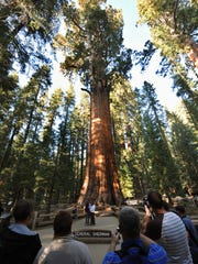 Visitors to Sequoia National Park look at the Gen. Sherman Tree, a giant Sequoia and the world's largest living tree.