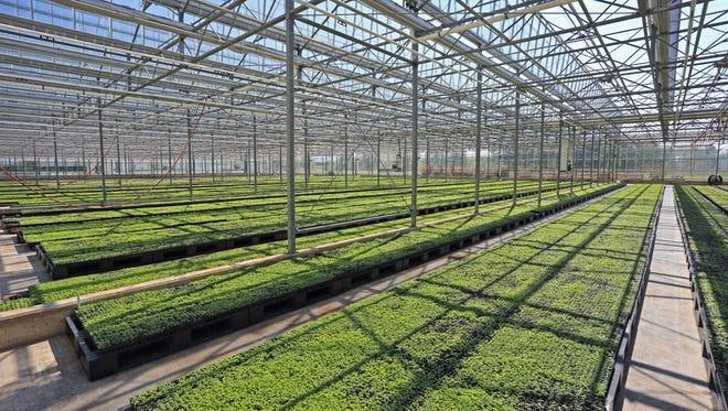 The Gaia Herbs greenhouse.
