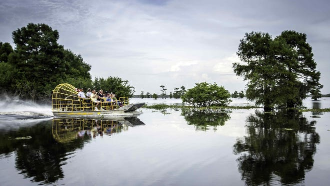 Go on a swamp tour (you know you always wanted to.)