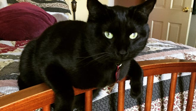 Kwazzi, the Jenkins family feline, is a loyal, if occasionally unpredictable companion to his humans.