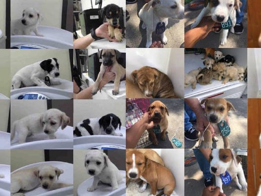 Animal shelter admits 59 puppies in one hour