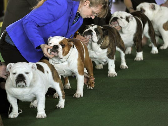 Best Of Breed National Dog Show