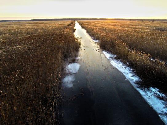 The sun rises over the phragmites in St. John's Marsh