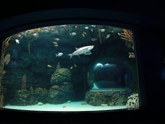 The Texas State Aquarium, 2710 N. Shoreline Blvd.,