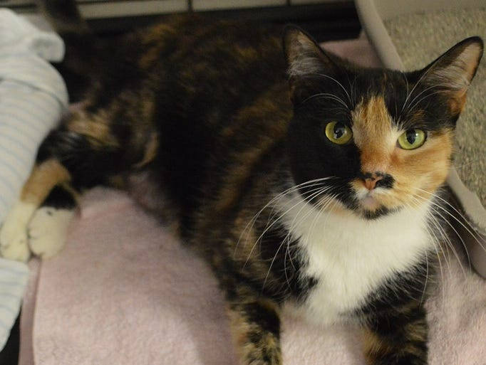 Sundae is available for adoption at Sun Cities 4 Paws,