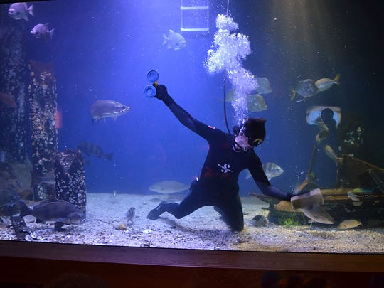 James Hill, aquarist at the Mississippi Museum of Natural Science, cleans inside the 100,000-gallon aquarium after he feeds the various species of fish.