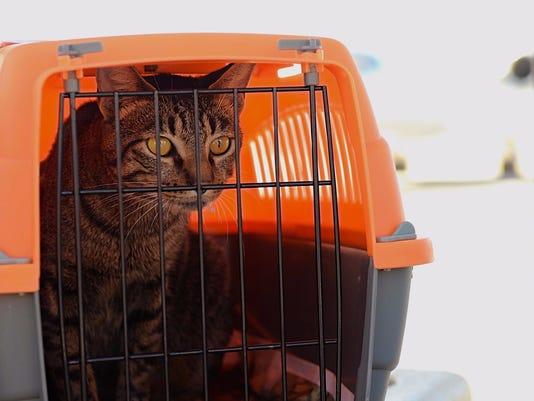 Reno-volunteers-rescue-hurricane-pets-05.jpg