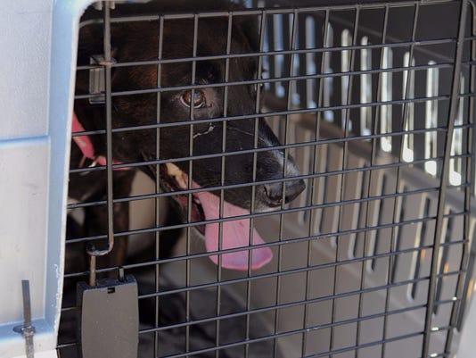 Reno-volunteers-rescue-hurricane-pets-01.jpg
