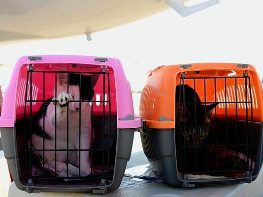 Reno-volunteers-rescue-hurricane-pets-06.jpg