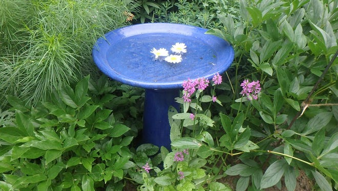 A simple blue birdbath adds color and interest to Henry's garden.