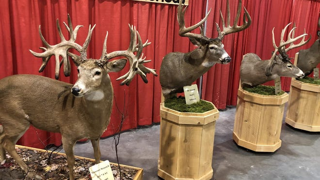 Monster deer harvested across North America stand on display during the 2020 Kansas Monster Buck Classic at the Stormont Vail Events Center this past January in Topeka. The 2021 event has been canceled due to the coronavirus pandemic.