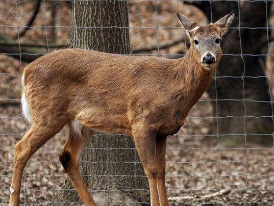 -MAR stk image deer farm.jpg_20140613.jpg