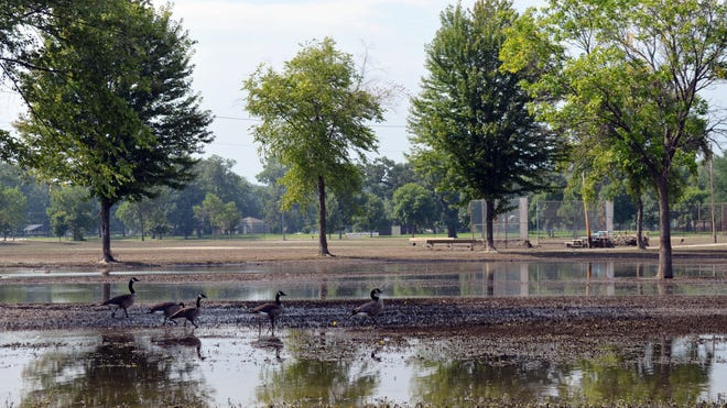 Geese were virtually the only sign of life in Lower City Park earlier this week as floodwater receded, leaving a muddy mess for the second straight summer. The park is expected to remain closed through about Aug. 1.