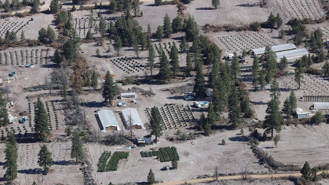 An illegal cannabis grow site on Stock Trail, in the vicinity of County Road A-12 and Mt. Shasta Vista. Some of these grows are irrigated by water that's trucked in from neighboring wells, causing citizens' wells to dry up.