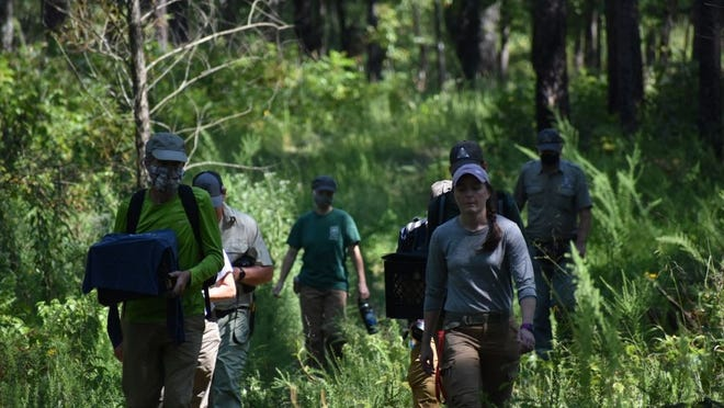 Forest Service, Missouri Department of Conservation, and other partners walking into the woods to show the brown-headed nuthatches their new home.