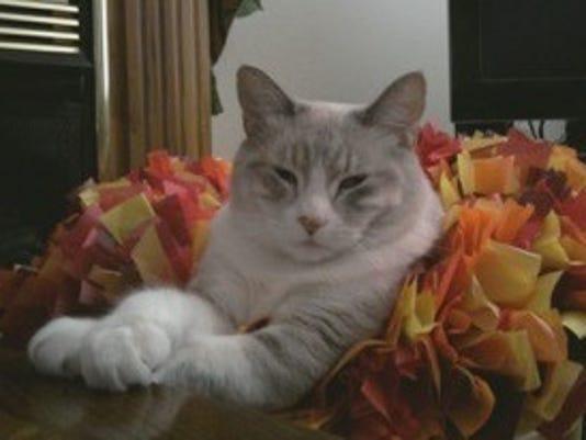 Pet Portraits: Sassy