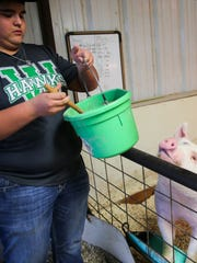 Coltyn Friend prepares a mixture of food for his hog at his home in Wall.