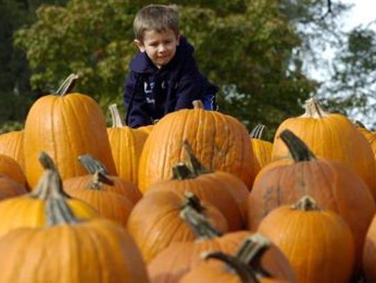 Pumpkin Fest at the Wilson Barn begins Sunday and runs