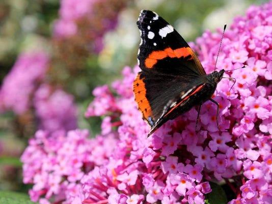 pollinator_shutterstock_269066354