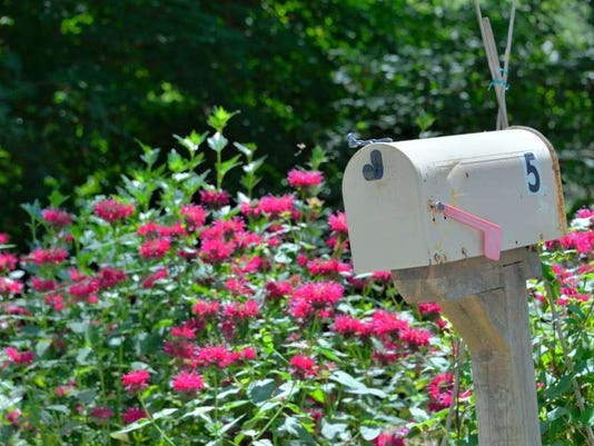 080516-ai-roadside-flowers04.jpg