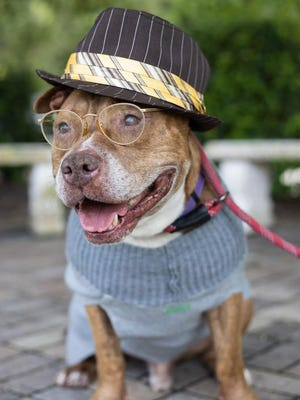 Kale is an 8-year-old neutered male terrier mix.