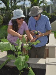 Candie and Fred Frankel look at an eggplant they just
