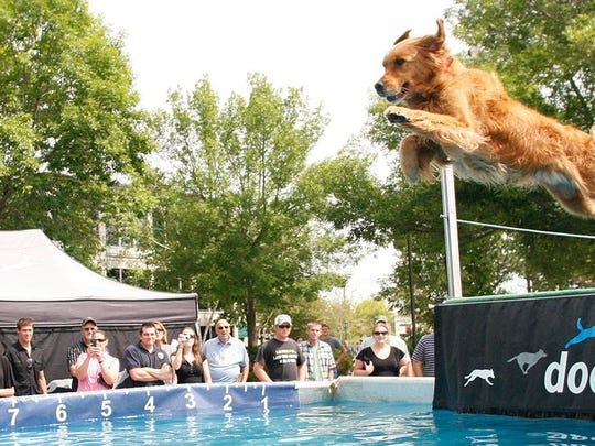 An aquatic dog jumping competition, DockDogs, will