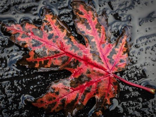 635494186841360008-OSH-Autumn-colors-10202014-JK-0008