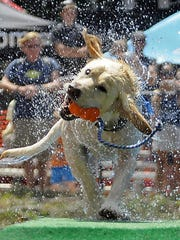 Ultimate Air Dogs come to the Asheville Outlets Oct.