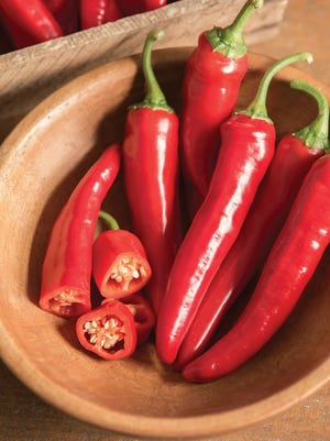 Red Ember pepper, a 2018 All-America Selections, is highly productive, even when grown in a container.