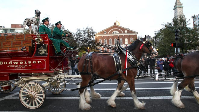 Budweiser's famed Clydesdales make a commercial in Boston this fall.