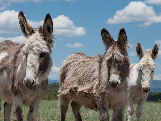 022214wild-burros