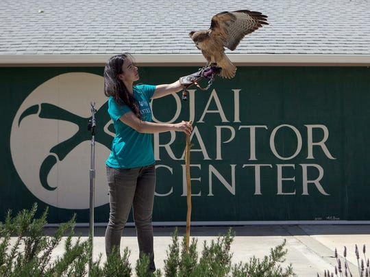 The Ojai Raptor Center will host its open house in noon to 4 p.m. Nov. 3. In this file photo, Rio Vogt shows off Rosie, a red-tailed hawk.