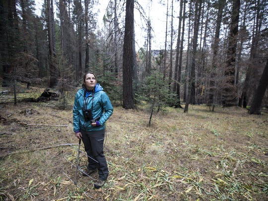 Melissa Merrick stands in the forest on Mount Graham in the Coronado National Forest. Merrick, a Senior Wildlife Biologist at the University of Arizona, researches red squirrels in the Pinaleño Mountains.