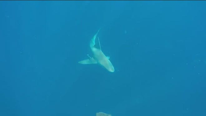 Randy Fales was OK after encountering two sharks in the waters off Brevard County on Sunday morning.
