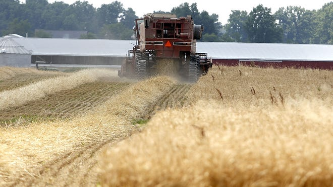 A farmer harvests his field of wheat on Township Road 1106 on Tuesday.