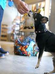 Katia Buskirk, owner of the new Z Bones Pet Mercantile at the Winslow Green, on Bainbridge Island, gives a dog treat to her dog Zachary.