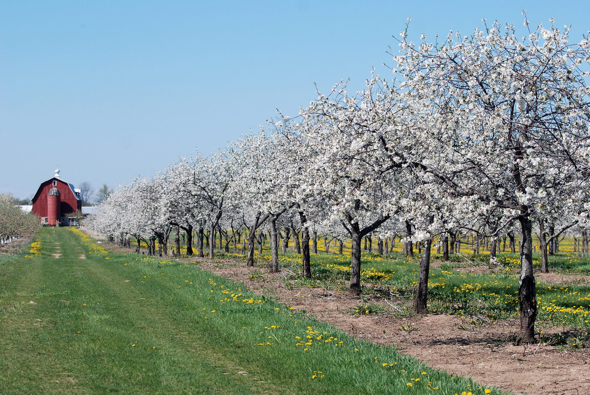 & Door County blossoms with things to do in spring pezcame.com