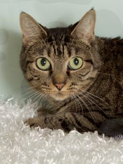Jezzabelle is available for adoption at 852 W. Melody
