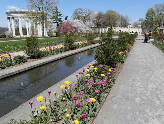 There are 9,000 tulips peaking May 2, 2015 at Untermyer