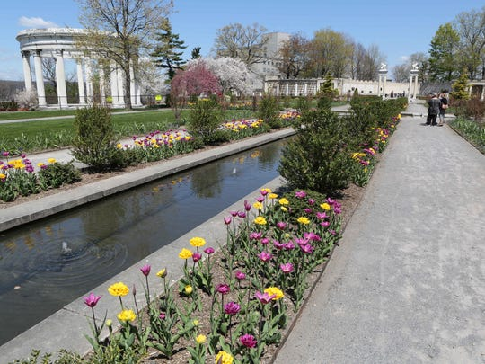 There are 9,000 tulips peaking May 2, 2015 at Untermyer Gardens on North Broadway in Yonkers. They should be seen during the next ten days.