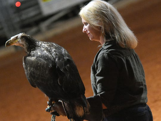 Amy Kight, executive director of the Busch Wildlife Sanctuary in Jupiter, holds Hannibal,  a 3-year-old eagle and one of the sanctuary's animal ambassadors.