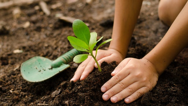 Close up Kid hand planting young tree