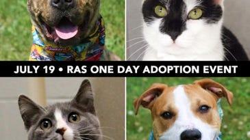 Verona Street's Animal Shelter Has a Full House