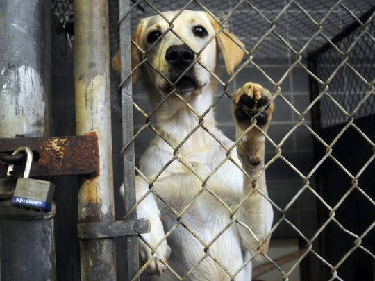 A dog looks through the fence of his cage at the animal control shelter at 4002 N. Farmer Road. Animal control is hoping to replace this old shelter with a new facility.