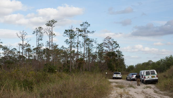 The heavily wooded area east of Bonita Springs Fire Station 26 and north of Bonita Beach Road where a single-engine plane crashed Monday, Jan. 22, 2018, in Bonita Springs.
