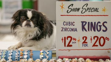 Geish, a dog guards the Fantasia Designs booth at the Greater Indianapolis Garage Sale, held at the Indiana State Fairground in Indianapolis, Jan. 14, 2017.